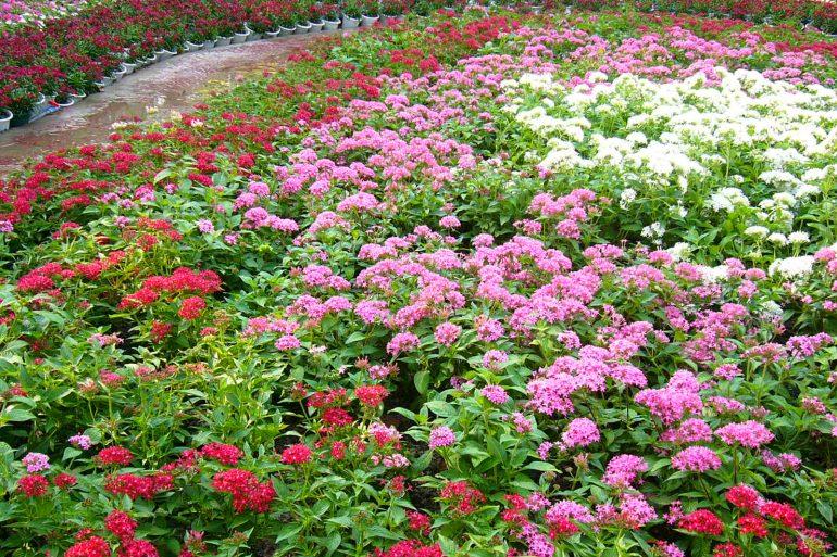 15 loại Hoa mùa hè đẹp rực rỡ
