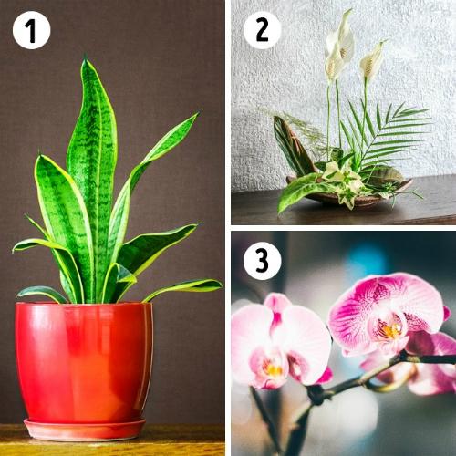Nasa công bố 17 loại cây cảnh giúp thanh lọc không khí cực tốt.